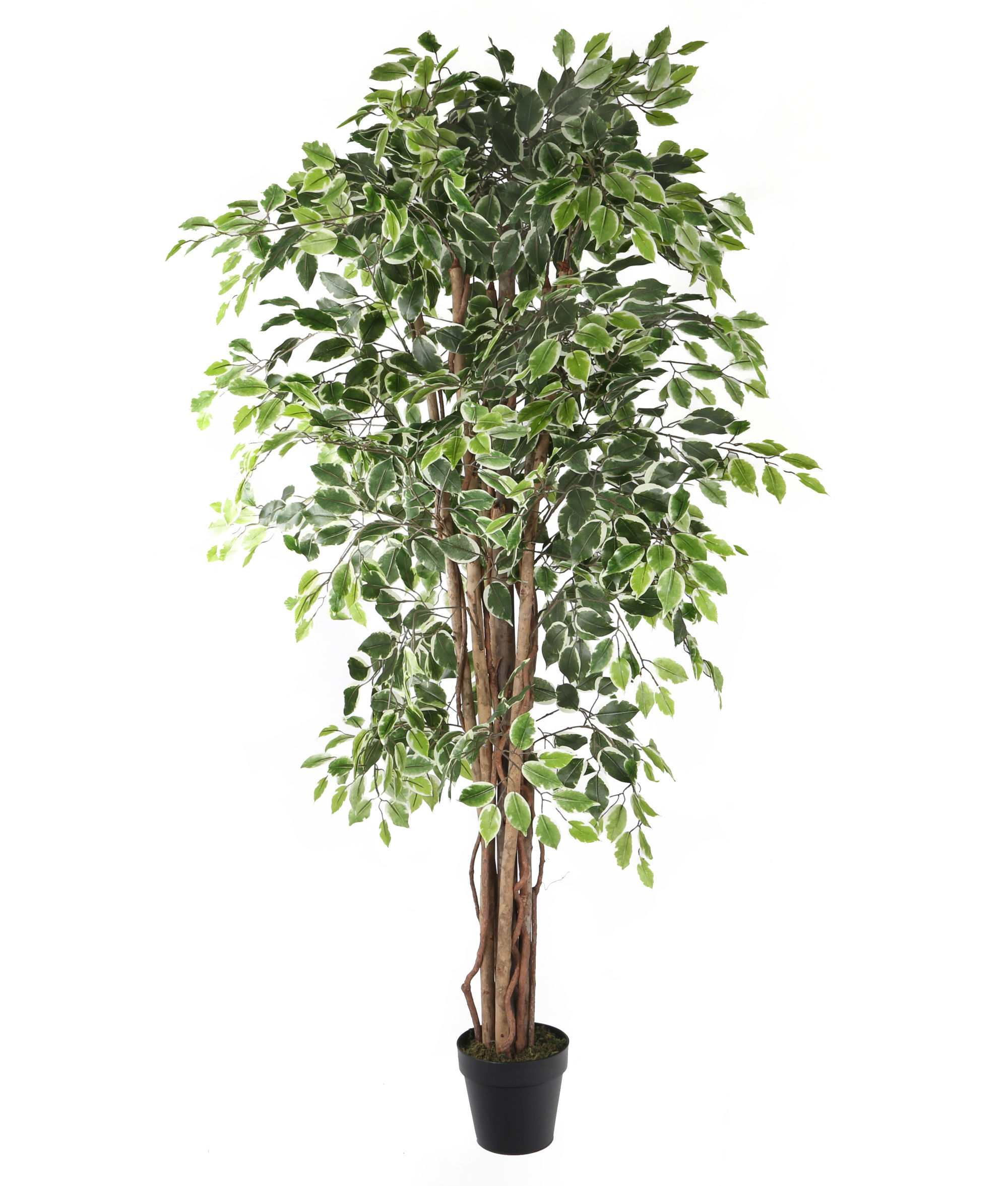 fake ficus tree artificial 6ft weeping fig tree ficus fig tree 3659