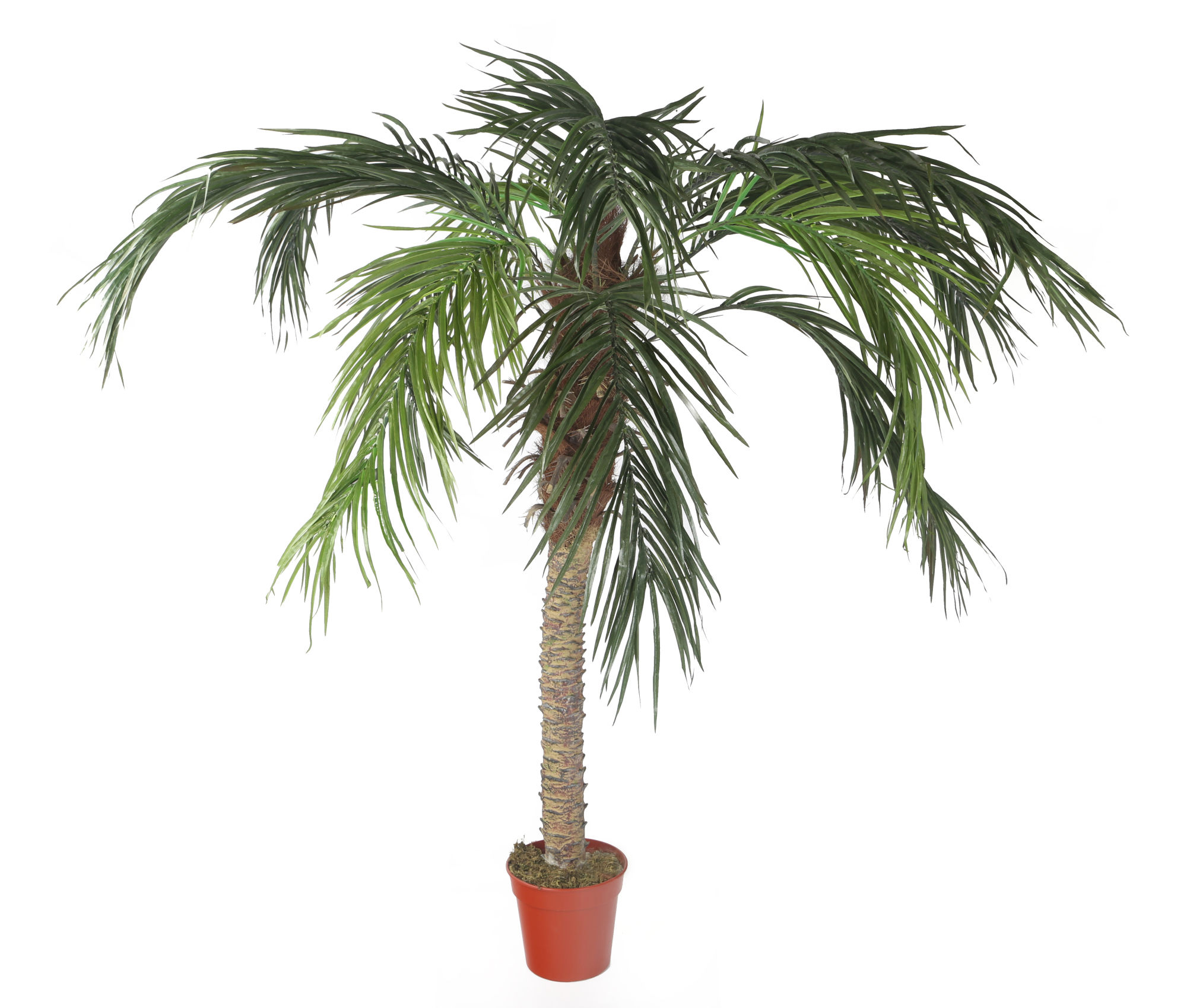 Silk Palm Tree Nearly Natural Faux 5foot Golden Cane